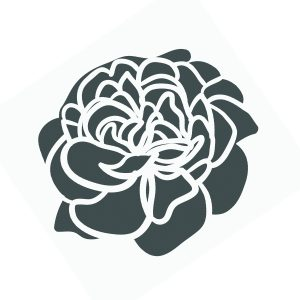 Black and white line art drawing of a carnation.
