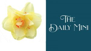 The Daily Mini announcement featuring a yellow daffodil.